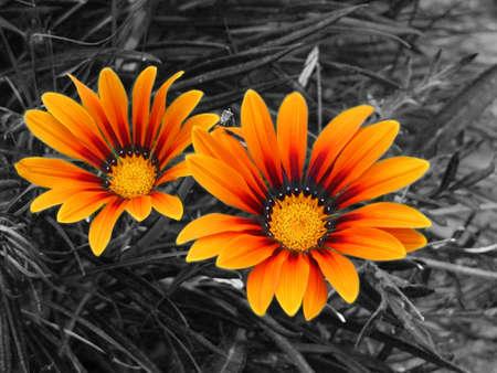 gelb: Pflanzen