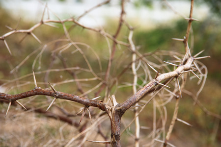 detrimental:   close up the spine of a dry tree. Stock Photo