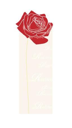 red  open: Single red open rose on beije background. Illustration