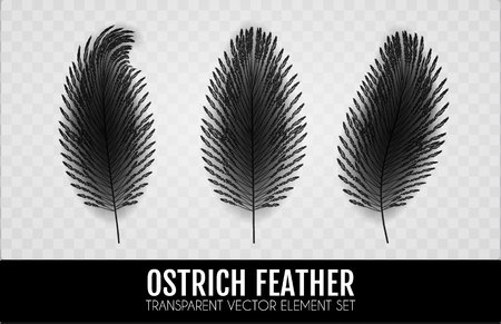 Realistic Feathers Set. Elegant Isolated Ostrich Feather Collection on Transparent Background. Vector illustration Ilustrace