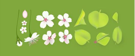 Apple and cherry flower and leaves set. Realistic blossom.