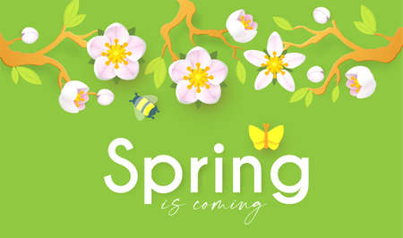Spring background with soft flowers, bees and butterflies. Spring is coming design with apple and cherry blossom branch Ilustrace