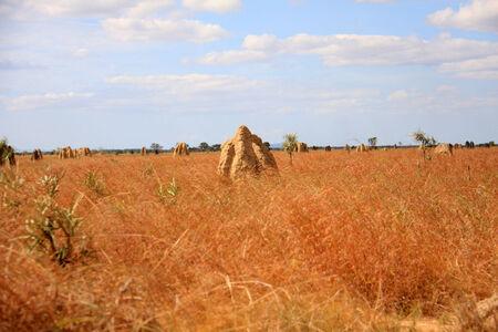 ameisenhaufen: Gro�e Ameisenhaufen in Lakefield Nationalpark, Nord-Australien