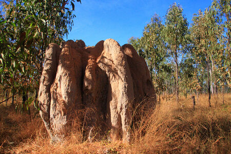 anthill: Big anthill in Lakefield National Park,North Australia Stock Photo
