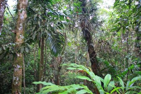 スリランカのシンハラジャ森林保護区