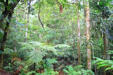 Sinharaja Forest Reserve in Sri Lanka Stock Photo