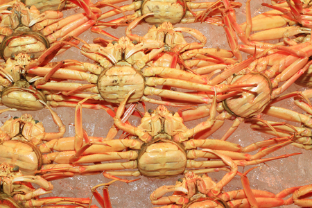 snow crab (Chionoecetes opilio) in Japan photo