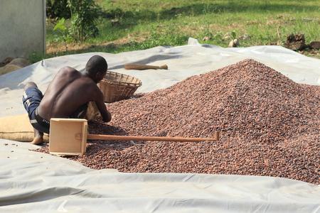 가나, 서부 아프리카에서 카카오 콩 스톡 콘텐츠