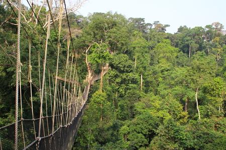 ガーナでカクン国立公園の熱帯雨林