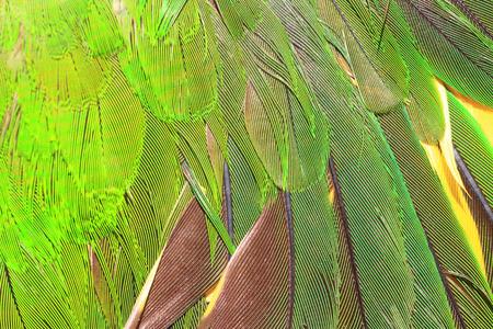 loros verdes: Una pluma de loro verde de cerca