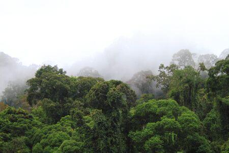 ダナム バレー森林、ボルネオ島、マレーシア