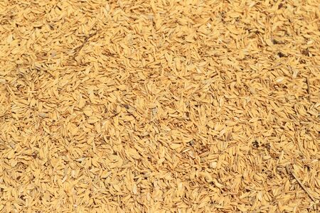 chaff: Rice husks of chaff in Japan Stock Photo