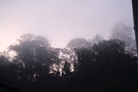 borneo: Borneo misty Rainforest in early morning Stock Photo