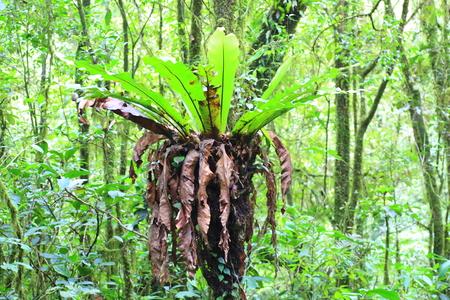 インドネシア ・ スマトラ島のマウンテン ビュー 写真素材