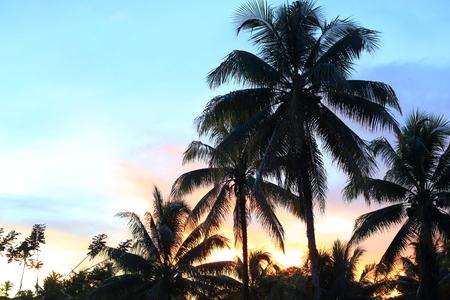 Beautiful sunset in Manus Island, Papua New Guinea Stock Photo - 88557449