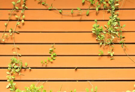 Climbing ivy on wooden wall photo