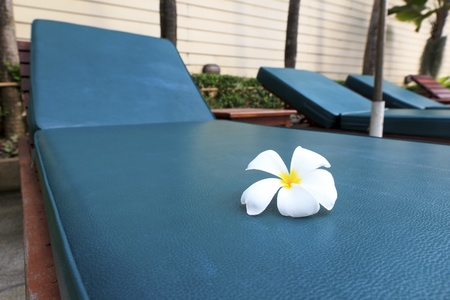 Frangipani flower on sunbed, focus on the flower  Can be used for tourism promotion  photo
