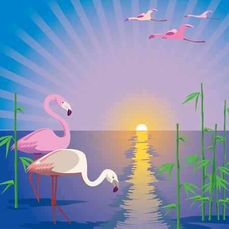 flamingi: Flamingos Ilustracja