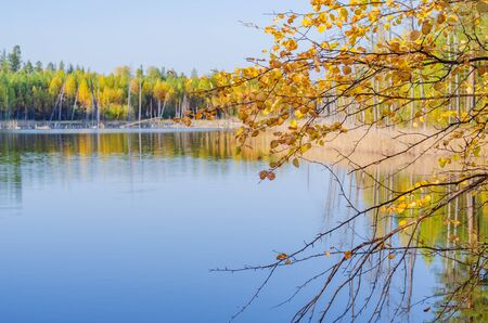 Birch branches with yellow-orange leaves of a forest lake.