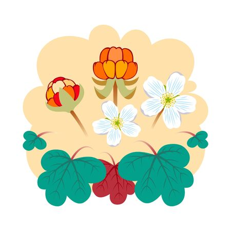 Cloudberry vector illustration. A cloudberry (Rubus chamaemorus) is a herbaceous plant in tundra and boreal forest