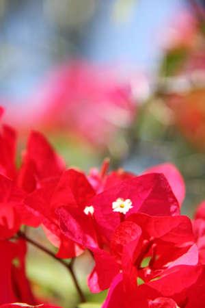 Little Flower Blooming Zdjęcie Seryjne