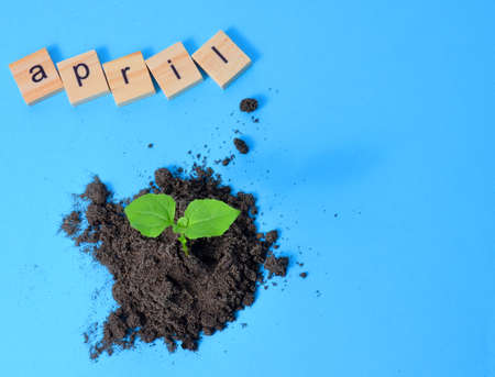 Spring month April month written in wooden letters on light blue background Calendar. Small sprout in the ground.