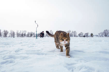 Cat on a fishing in winter Stock Photo