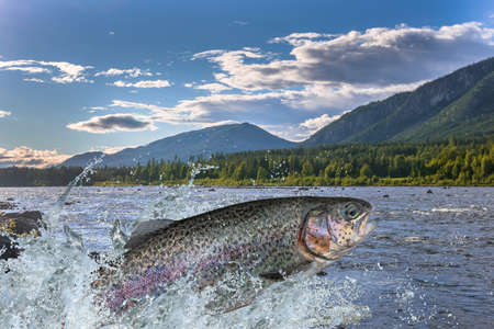 Trout fish jumping with splashing in water Banco de Imagens