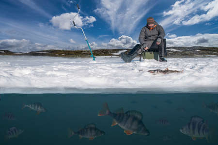Winter fishing background. Fisherman in action. Catching perch fish from snowy ice at lake above troop of fish. Double view under and above water