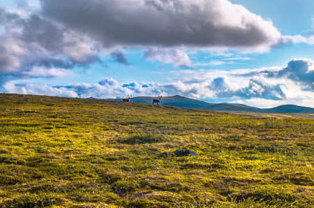 Mountain landscape of meadow and sky in Norway 免版税图像