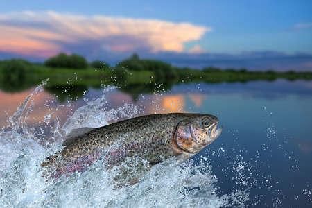 Angeln. Regenbogenforellenfisch, der mit Spritzen im Wasser springt