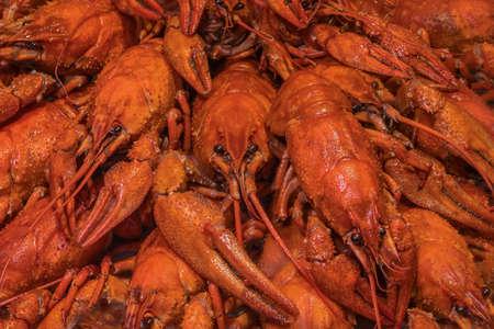 Boiled crawfish. Background of many red crayfish.