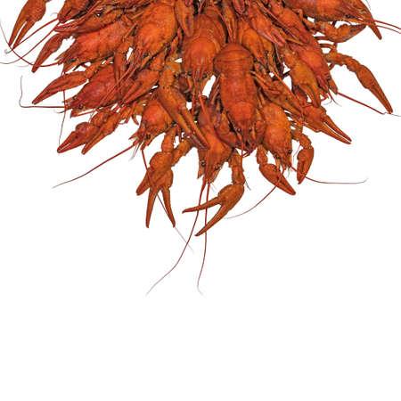 Boiled crawfish. Red crayfish isolated on white background Imagens