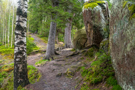 Hiking trail. Mountain path in forest between trees and rocks Stock Photo