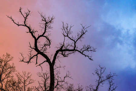 Mysterious dramatic landscape in cold tones - silhouettes of the bare tree branches against color toned cloudy sky Stock Photo