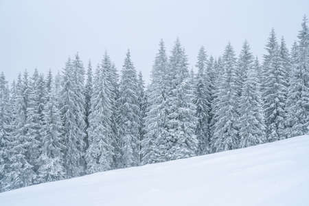 Winter mountains powder slope. Carpathians hill snow covered