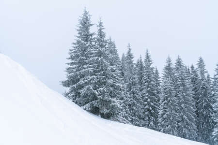Winter mountains landscape of Carpathians hill and christmas tree snow covered Stock Photo