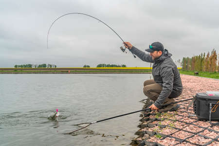 Area trout fishing. Fisherman with spinning rod in action playing fish. Reklamní fotografie