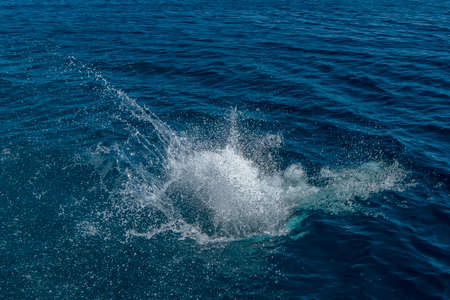 Water drops splashing after jumping to sea. Spray splashes in dark blue ocean surface