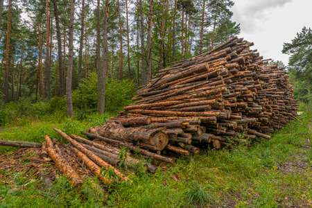 Deforestation concept. Stumps, logs and branches of tree after cutting down forest