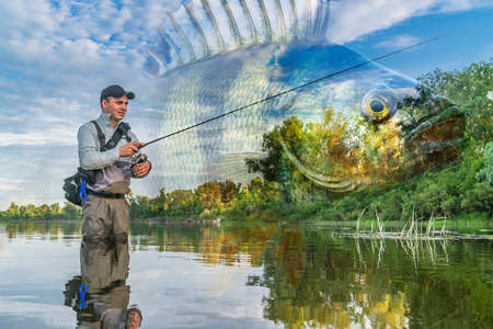 Perch fishing. Photo collage of angler in river water on soft focus perch fish background. Archivio Fotografico