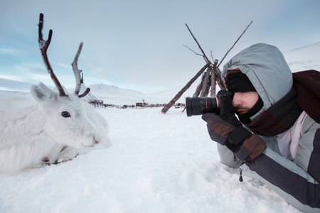 A young photographer shoots a white and cute deer lying on the snow. Very cold. Russia, Siberia, Yamal.