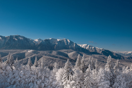 Winter landscape of carpathians mountains. Snowy fir-trees, blue and clear sky after sunrise. Romania, Poiana Brasov.