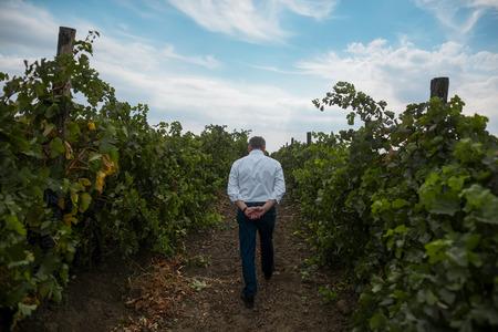 Back view of old man vintner who walking in vineyard