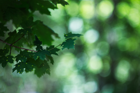 Summer background of close-up green branch on bokeh. Stock Photo