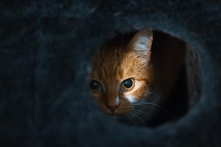 Porträt einer süßen roten weißen Katze, die sich in der Blackbox versteckt. Standard-Bild