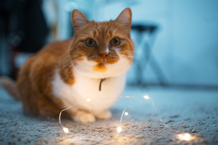 Red white cat playing with garlands on the floor Stock Photo