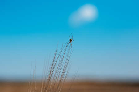 Close-up of spider on background of blue sky.