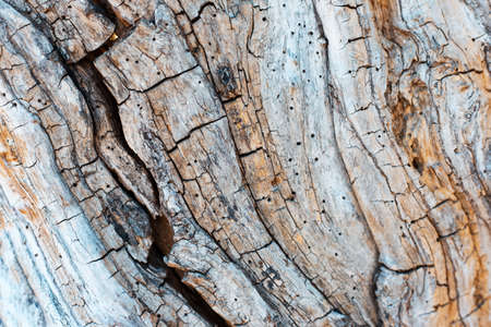 Natural textured abstract background of old wooden surface with different lines. 版權商用圖片