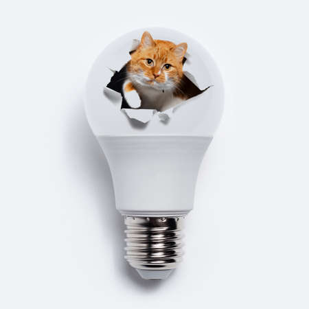 Close-up of red cat comes out from torn hole on light bulb, on white background. Contemporary artwork collage concept.